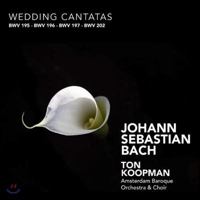 Ton Koopman 바흐: 결혼 칸타타 (Bach: Wedding Cantatas BWV195, 196, 197, 202)