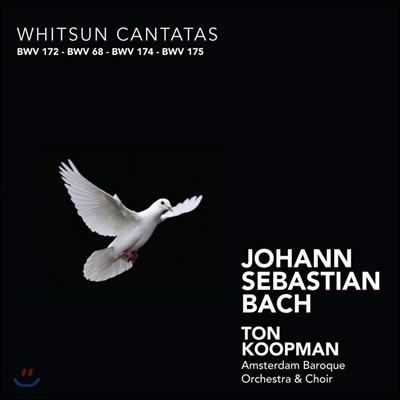 Ton Koopman 바흐: 성령강림절 칸타타 (Bach: Whitsun Cantatas BWV172, 68, 174, 175)