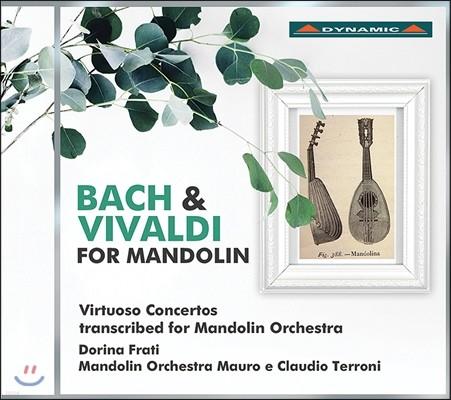 Dorina Frati 바흐와 비발디 작품집 - 협주곡집 [만돌린 오케스트라를 위한 편곡반] (J.S. Bach & Vivaldi for Mandolin - Virtuoso Concertos) 플레트로 마우로 & 클라우디오 테로디 오케스크라, 도리나 프라티