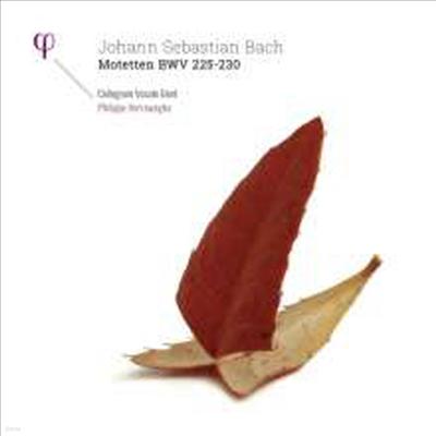 바흐: 모테트 (Bach: Motets, BWV225 - 230) (180g)(2LP) - Philippe Herreweghe