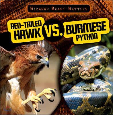 Red-Tailed Hawk vs. Burmese Python