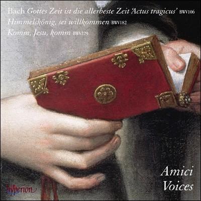 Amici Voices 바흐: 칸타타 (Bach: Cantatas BWV106, 182, 229)