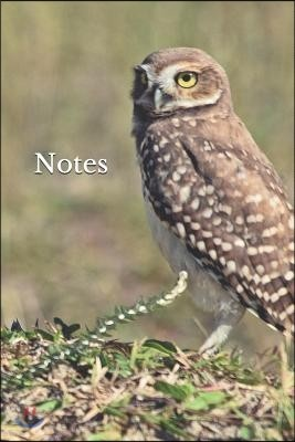 Notes: Owl 6 X 9 Blank Lined Writing Notebook Journal Composition Book, 110 Pages - Great Gift Idea for Owl Lovers