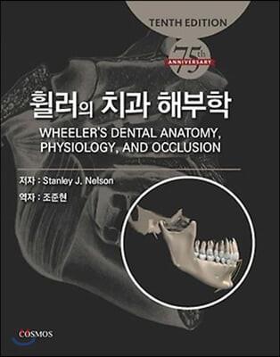 휠러의 치과 해부학