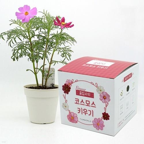 (우리집 정원가꾸기)꽃집사 - 코스모스 키우기