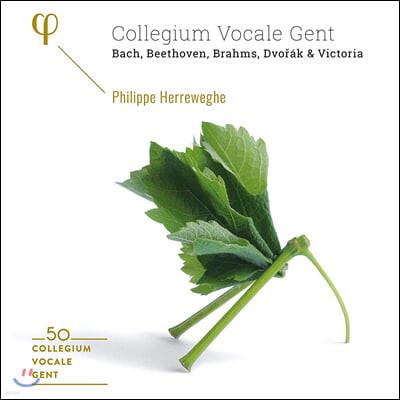 Phillipe Herreweghe 필립 헤레베헤 - 콜레기움 보칼레 겐트 50주년 박스 세트 (Collegium Vocale Gent: 50th Anniversary)