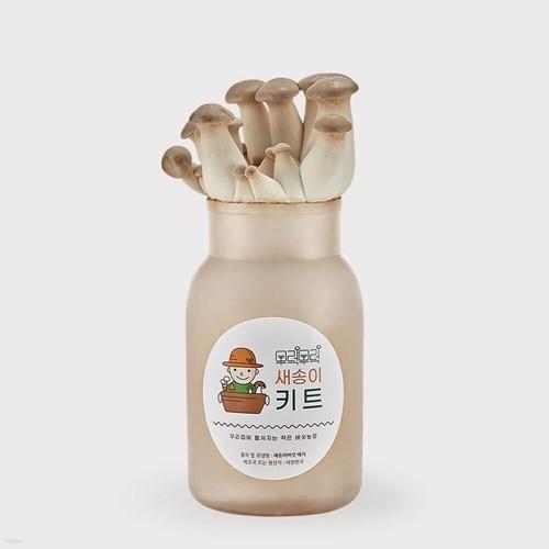 무럭무럭 새송이버섯 키우기 키트 1입