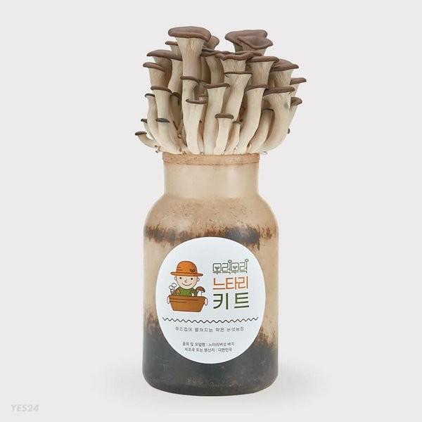 무럭무럭 느타리버섯 키우기 키트 1입