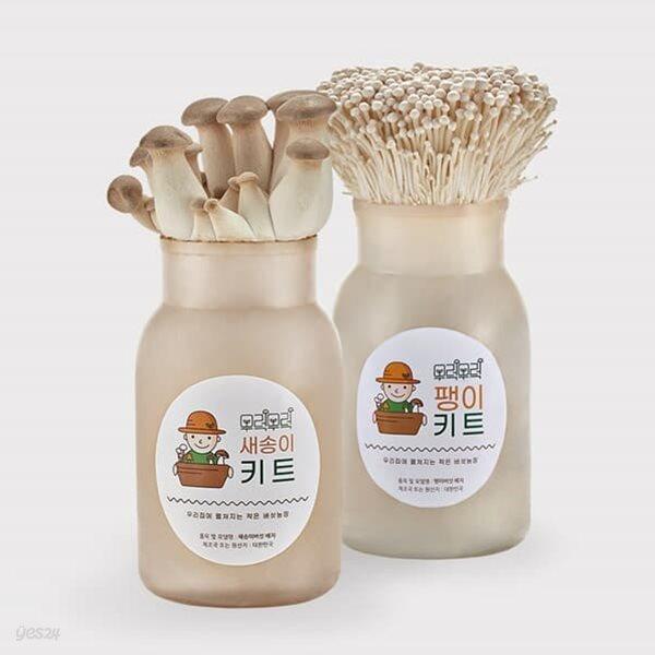 무럭무럭 새송이버섯+팽이버섯 키우기 키트