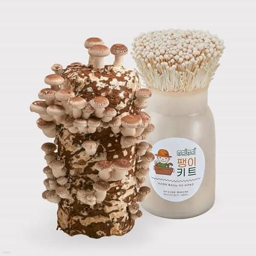 무럭무럭 표고버섯+팽이버섯 키우기 키트