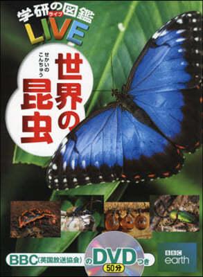 (예약도서)世界の昆蟲