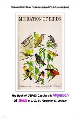 북미에서의 철새들의 이동. The Book of USFWS Circular 16: Migration of Birds (1979), by Frederick C. Lincoln