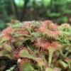 무럭무럭 끈끈이주걱(피그미) 식충식물 키우기 키트(코코넛화분+배양토)