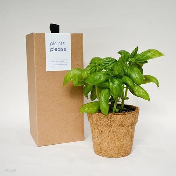 코코넛화분+선물박스 맛있는 허브 식물키우기_바질