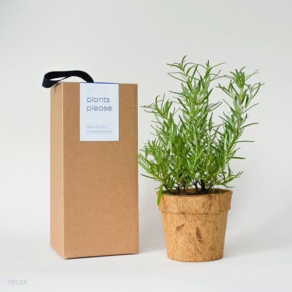 코코넛화분+선물박스 내가 직접 수확해서 먹을 수 있는 향신료 허브 식물키우기_로즈마리