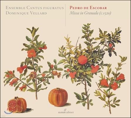 Cantus Figuratus 에스코바르: 그라나다 미사 (Escobar: Missa in Granada)