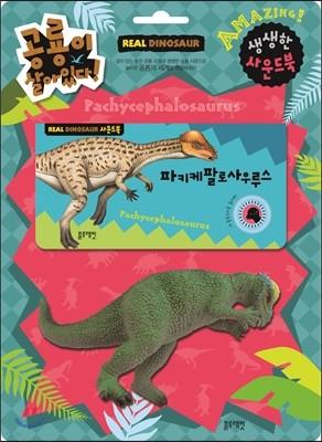 공룡이 살아있다 (파키케팔로사우루스)