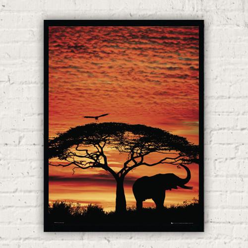 PH0279 아프리카 선셋 엘리펀트