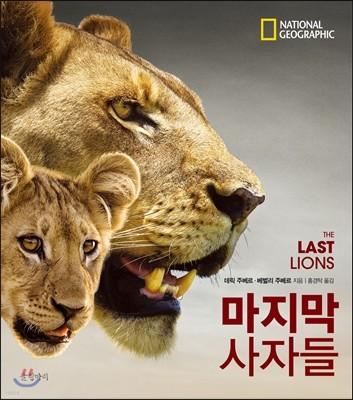 마지막 사자들