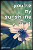 [�ܵ�10��뿩][��Ʈ] You��re my sunshine (��2��/�ϰ�)