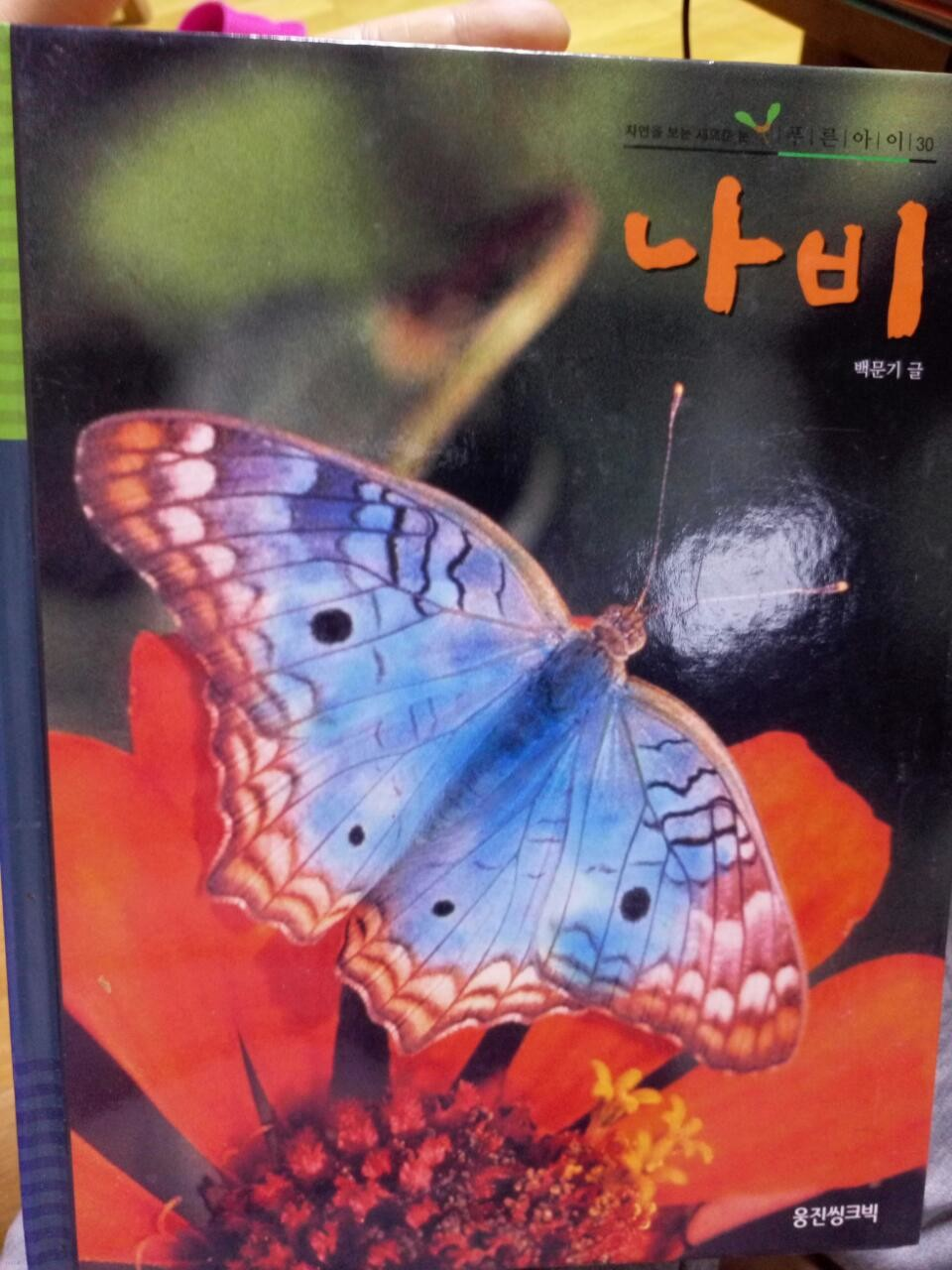 웅진 푸른아이 30 나비