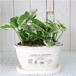 공기정화식물-오벌팟