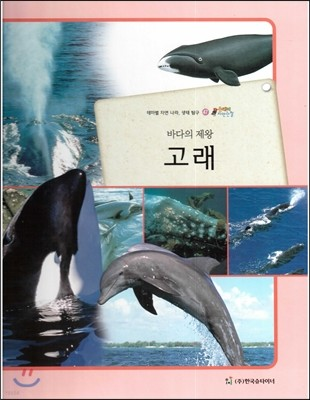 올빼미 자연관찰 47 바다의 제왕 고래 (포유류)