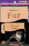 [Brain Bank] G1 Science 1 : Fur