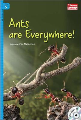 5-26 Ants are Everywhere!