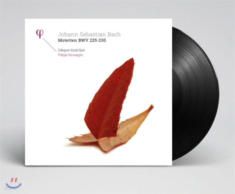 Philippe Herreweghe 바흐: 모테트 BWV 225-230 - 필립 헤레베헤 [2LP]