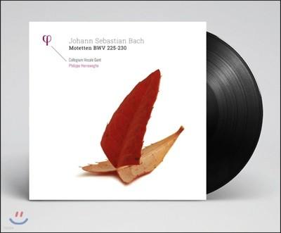 Philippe Herreweghe 바흐: 모테트 BWV 225-230 [2LP]