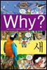 Why? 와이 새