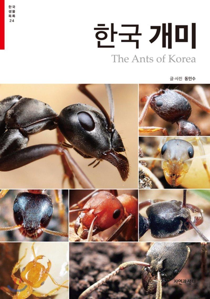 한국 개미