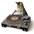 [원더스토어] 썩유케이 턴테이블 고양이 스크래쳐
