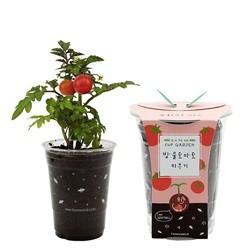 (컵 안의 미니정원) 컵가든_방울토마토 키우기