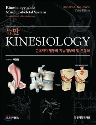 뉴만 kinesiology 근육뼈대계통의 기능해부학 및 운동학