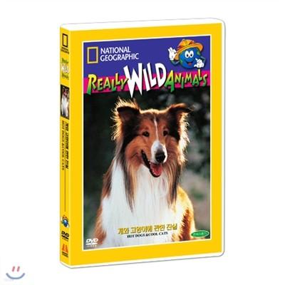 [내셔널지오그래픽] 개와 고양이에 관한 진실 (Hot Dogs & Cool Cats DVD)