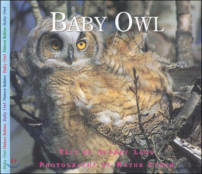 [염가한정판매] Baby Owl