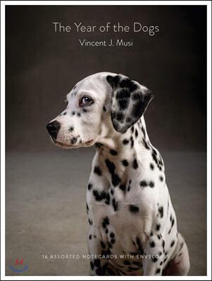 Year of the Dogs Notecards : 열여섯마리 강아지 노트카드
