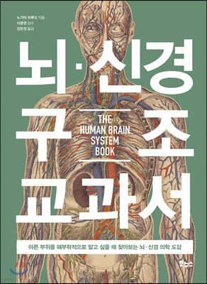 뇌·신경 구조 교과서