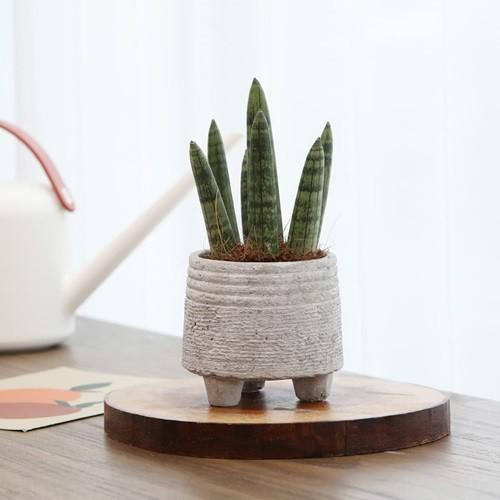 나만의 정원 공기정화식물 시멘트 화분 스투기