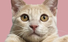 고양이 만화 기획전 : 인생에 고양이를 더하면 그 힘은 무한대가 된다