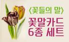 『꽃들의 말』 꽃말카드 6종 세트 증정