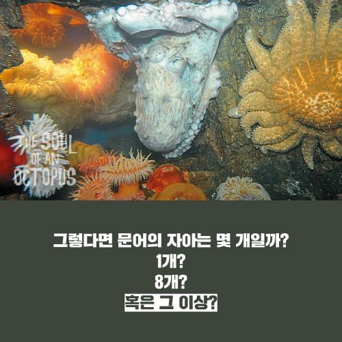 문어의영혼_카드리뷰-8.jpg