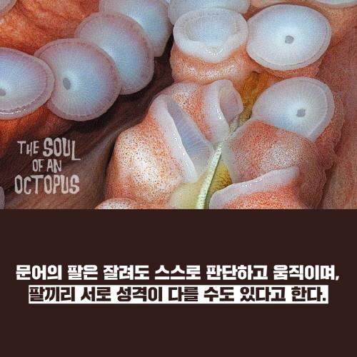 문어의영혼_카드리뷰-7.jpg