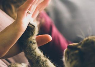 [나도, 에세이스트] 10월 우수상 ? 고양이에게 배운 인간 사귀는 법   YES24 채널예스