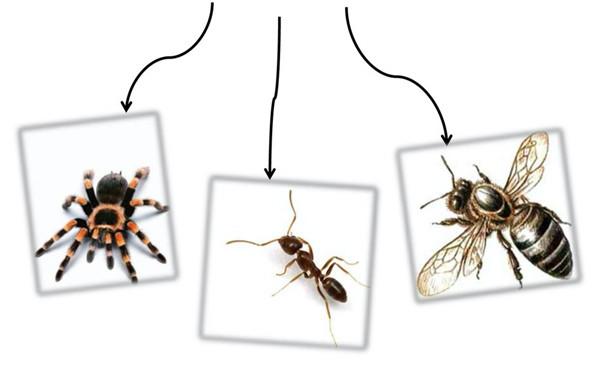 그림4-거미-개미-꿀벌.jpg