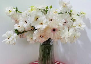 [윤가은의 나만 좋아할 수도 있지만] 꽃 속에 있는 것   | YES24 채널예스