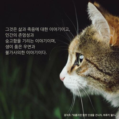 외롭지만 힘껏 인생을 건너자, 하루키 월드_이카드 (15).jpg