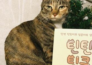 단짝 고양이들의 일상을 그린 만화  『틴틴팅클!』   YES24 채널예스